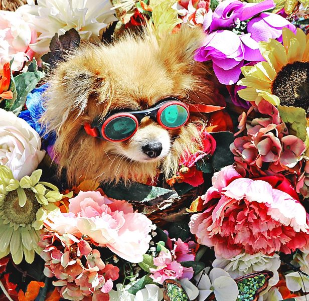 dog and flowers v2